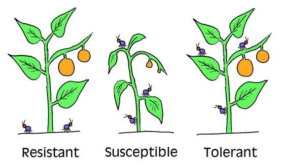 resistant varieties